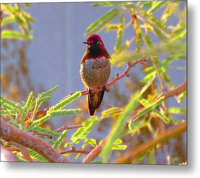 Little Jewel With Wings Third Version Metal Print