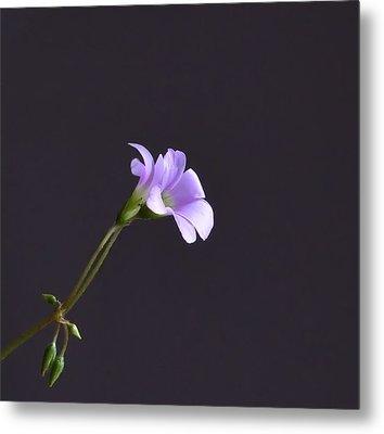 Little Lavender Flowers Metal Print
