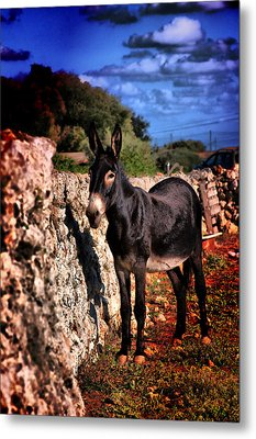 Little Mediterranean Donkey Dream Color With White Eyes And Belly  Hdr By Pedro Cardona Metal Print by Pedro Cardona Llambias