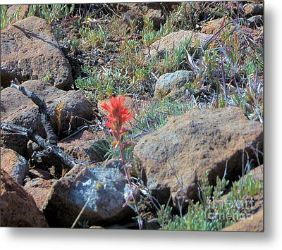 Little Orange Wild Flower Metal Print by Debbie Wells