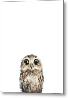 Little Owl Metal Print by Amy Hamilton