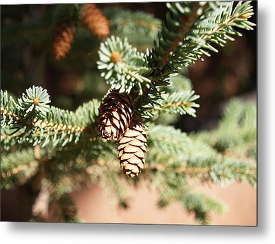 Little Pine Cones Metal Print by James Granberry