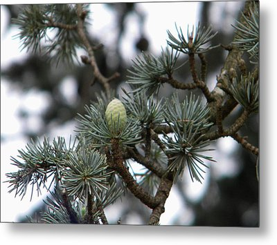 Metal Print featuring the photograph Little Pinecone by Manuela Constantin