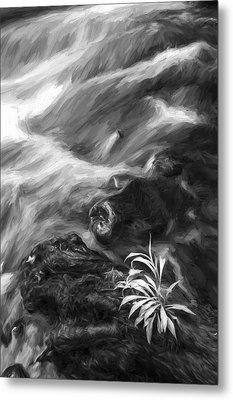 Little Plant II Metal Print by Jon Glaser