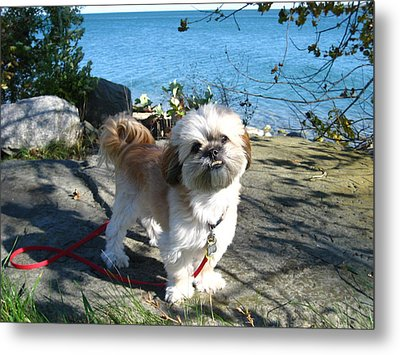 Little Poser Metal Print by Sheryl Burns