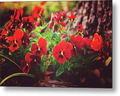 Metal Print featuring the photograph Little Red Pansies by Toni Hopper