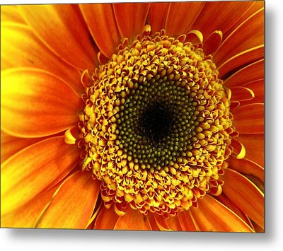 Little Sun Metal Print by Rhonda Barrett