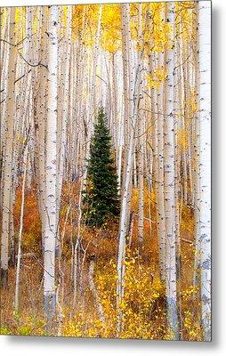 Little Tree Metal Print by Tim Reaves