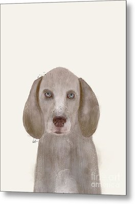 Metal Print featuring the painting little Weimaraner by Bri B