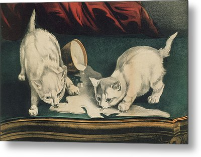 Metal Print featuring the painting Little White Kitties Into Mischief                                                      by Matthias Hauser
