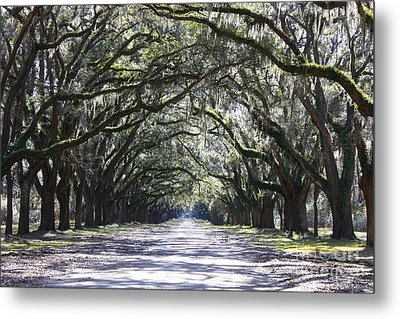 Live Oak Lane In Savannah Metal Print