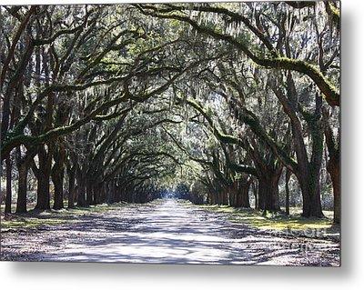 Live Oak Lane In Savannah Metal Print by Carol Groenen