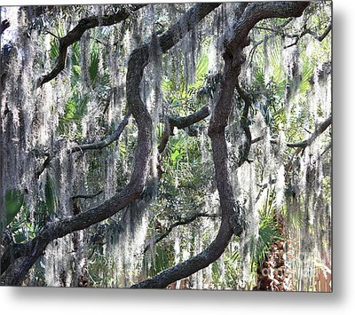 Live Oak With Spanish Moss And Palms Metal Print by Carol Groenen