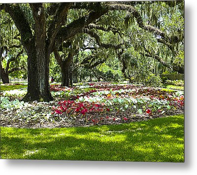 Metal Print featuring the photograph Live Oaks At Brookgreen Gardens by Bill Barber