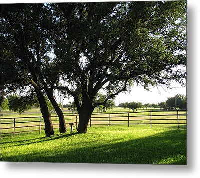 Live Oaks At Sunset Metal Print by Shawn Hughes