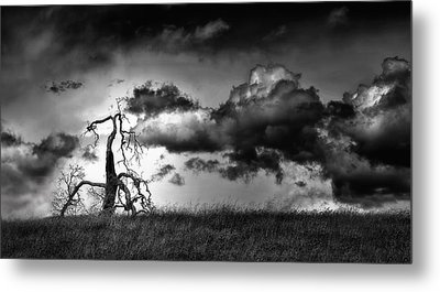 Loan Tree Metal Print