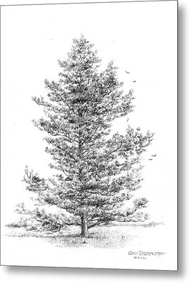Loblolly Pine Metal Print by Jim Hubbard
