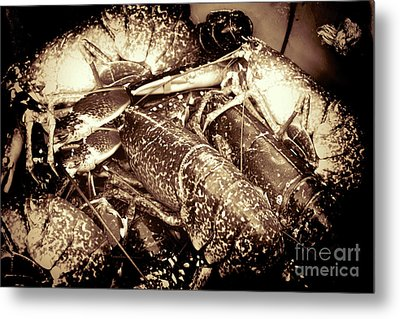 Lobster Catcher Metal Print by Baggieoldboy