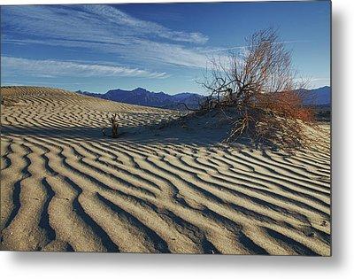 Lone Bush Death Valley Hdr Metal Print by James Hammond