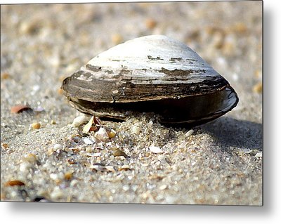 Lone Clam Metal Print by Mary Haber