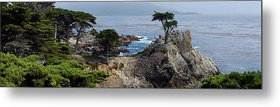 Metal Print featuring the photograph Lone Cypress by Luis Esteves