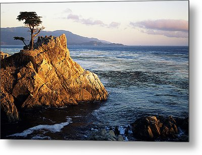 Lone Cypress Tree Metal Print by Michael Howell - Printscapes