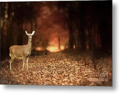 Metal Print featuring the photograph Lone Doe by Darren Fisher