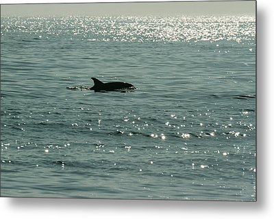 Lone Dolphin Metal Print by Allan Levin