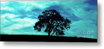 Metal Print featuring the photograph Lone Oak by Jim and Emily Bush