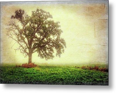 Lone Oak Tree In Fog Metal Print by Jennifer Rondinelli Reilly - Fine Art Photography