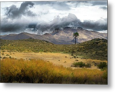 Metal Print featuring the photograph Lone Pine High Desert Nevada by Frank Wilson