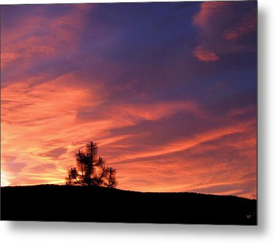 Lone Pine Sunset Metal Print by Will Borden