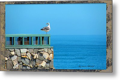 Lone Sea Gull Metal Print by Doreen Whitelock