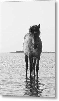 Lone Stallion Metal Print