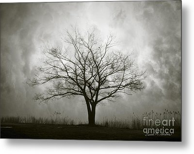 Lone Tree And Clouds Metal Print by Dave Gordon