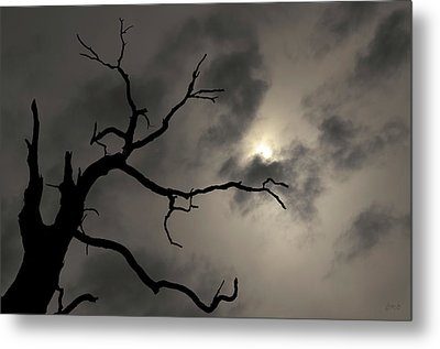 Metal Print featuring the photograph Lone Tree And Sun Toned by David Gordon