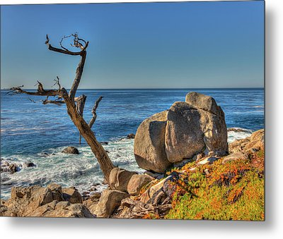 Lone Tree California Coast Metal Print by James Hammond