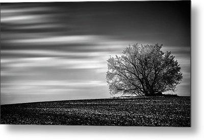 Metal Print featuring the photograph Lone Tree by Dan Jurak