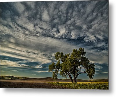 Lone Tree In Field Metal Print