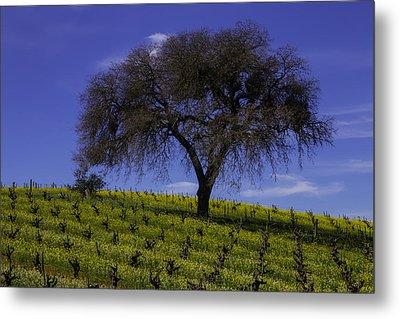 Lone Tree In Vineyard Metal Print