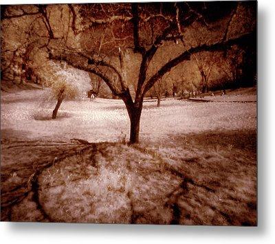 Lone Tree Metal Print by Michael Cleere