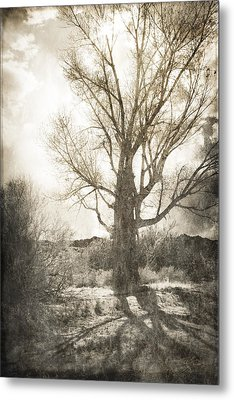 Lone Tree Metal Print by Michele Cornelius