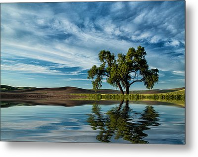 Lone Tree Pond Reflection Metal Print