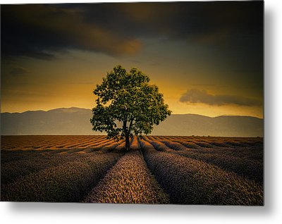 Lone Tree Valensole Metal Print by Alexander Hill