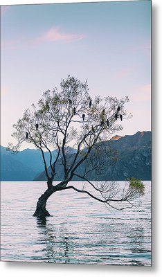 Lone Tree - Wanaka #2 Metal Print by Russ Dixon
