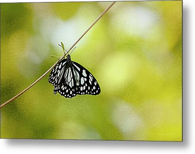 Lonely Butterfly  Metal Print by Maria Angelica Maira