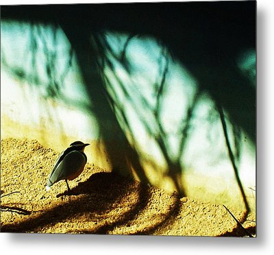Metal Print featuring the photograph Lonely Little Bird by Shawna Rowe