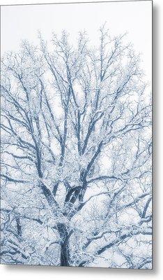 lonely Oak tree in snowy, misty landscape Metal Print by Christian Lagereek