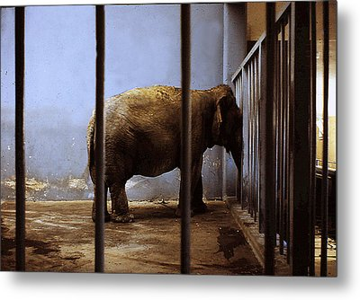 Lonely One Metal Print by Richard Ortolano