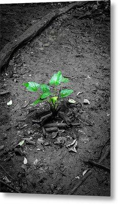 Lonely Plant Metal Print